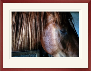 This maroon-painted frame moulding picks out the reddish tone of the horse's colouring.